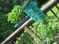 2010 June 26 Bloomington pictures 026
