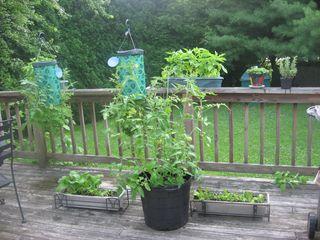 2010 June Bloomington pictures 116
